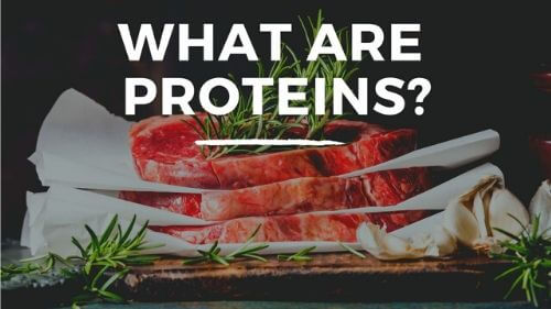 what are proteins baldock
